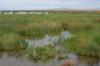 Des références récentes sur les zones humides méditerrannéennes