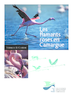 Les flamants roses en Camargue - application/pdf